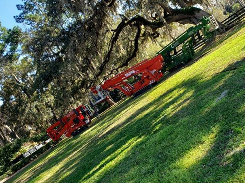 Tree Trimming Gainesville FL