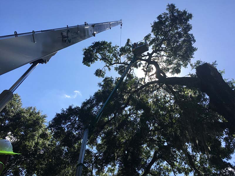 Tree Care Gainesville FL