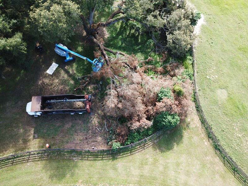 Tree Care Ocala FL