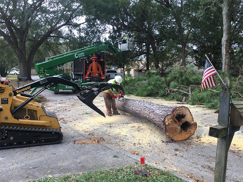 Tree Service Gainesville FL
